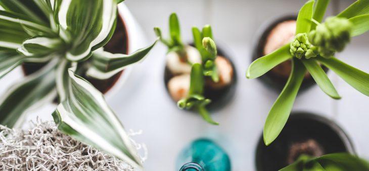 Květiny do interiéru, které čistí vzduch