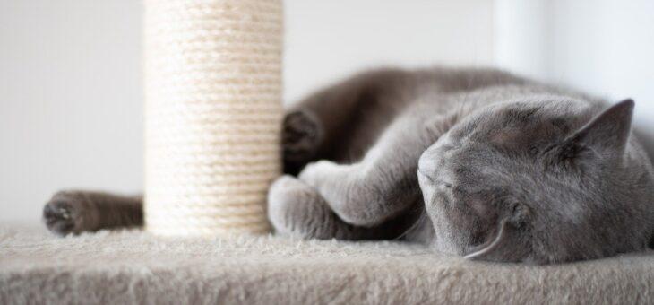 Podle čeho vybírat škrabadla pro kočky?